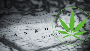 Cannabis Legalization: One Month Later.